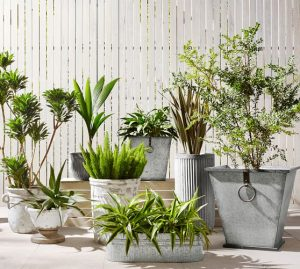 Metal Flower Pots: Are They Best for Your Garden?