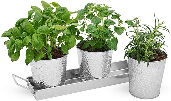 Edible Plants that can be Grown in Metal Pots